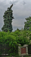 Prasklý smrk v Sakrabonii