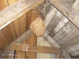 Likvidace sršňího hnízda