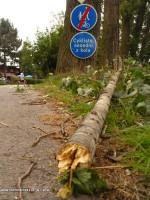 Pád větve z topolu na cyklistu