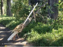 Spadlá větev na cyklostezce