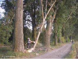 Likvidace spadlé větve na cyklostezku