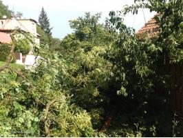 Pád stromu na komunikaci a RD
