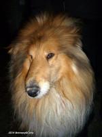 Záchrana psa ulice Rumunská