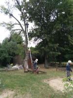 Prasklé větve i strom ulice Fugnerova