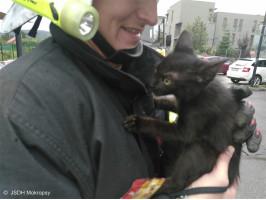 Záchrana kotěte z římsy ulice Táborská
