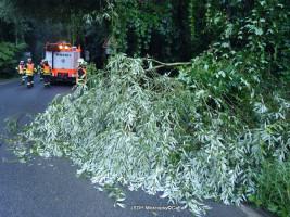 Padlý strom na komunikaci ulice Karlštejnská