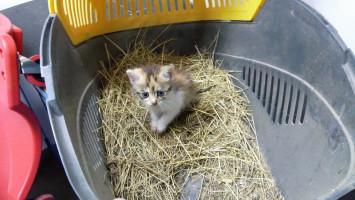 Záchrana kotěte z kanálu ulice Školní