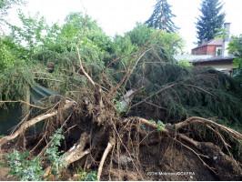 Odstraňování následků bouře Černošice den druhý